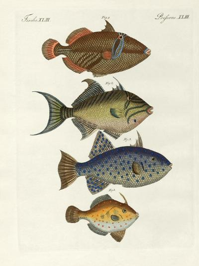 Foreign Fish--Giclee Print