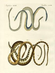 Foreign Kinds of Blindworms