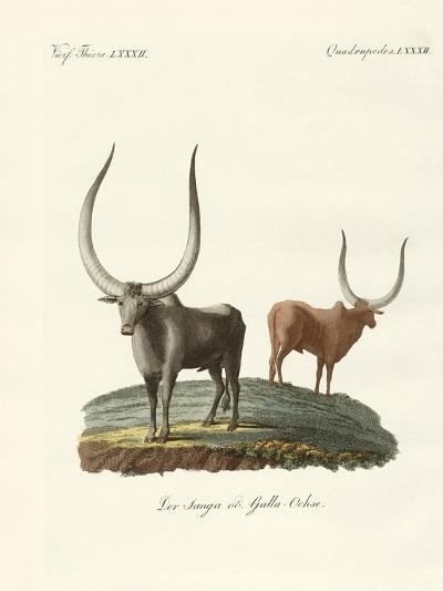 Foreign Mammals--Giclee Print
