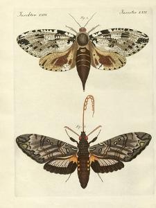 Foreign Moths