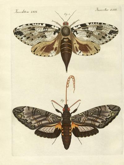 Foreign Moths--Giclee Print