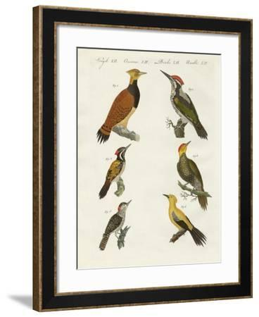 Foreign Wookpeckers--Framed Giclee Print