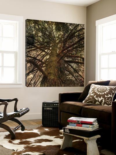Forest 6-Jean-Fran?ois Dupuis-Loft Art