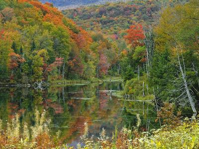 Forest and Pond in the Fall, Green Mountains, Vermont, USA-Gustav Verderber-Photographic Print
