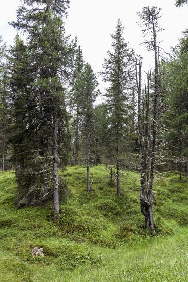 Forest at the Bottom of the Sas Dla Crusc, St. Leonhard Close Abtei, South Tyrol, Italy, Europe-Gerhard Wild-Photographic Print