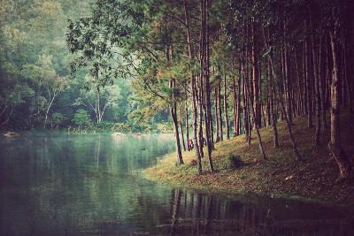 Forest Background ,Vintage Style- Nonnakrit-Photographic Print