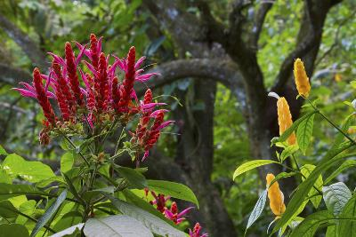 Forest Blooms, Asa Wright Natural Area, Trinidad-Ken Archer-Photographic Print