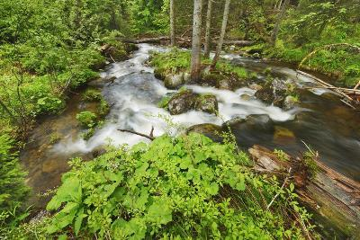 Forest Brook in Beech Forest with Deadwood-Frank Krahmer-Photographic Print