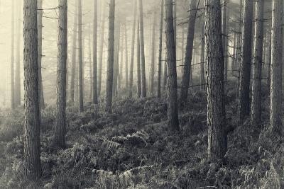 Forest Calm-David Baker-Photographic Print