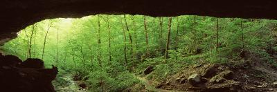 Forest, Cobb Cave, Lost Valley, Ozarks, Arkansas, USA--Photographic Print