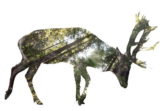 Forest - Deer - Silhouette--Photographic Print