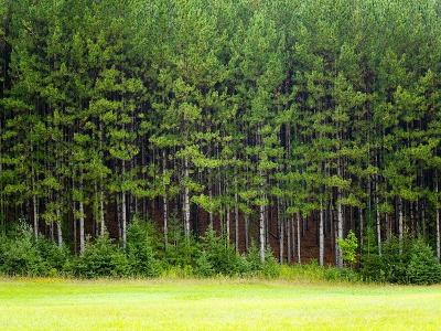 Forest Edge-Jim Craigmyle-Photographic Print