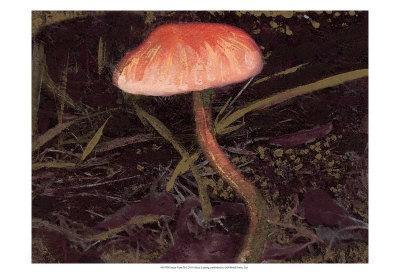 https://imgc.artprintimages.com/img/print/forest-floor-ii_u-l-f3r4ot0.jpg?p=0