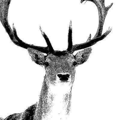 Forest Focus - Deer-Myriam Tebbakha-Giclee Print