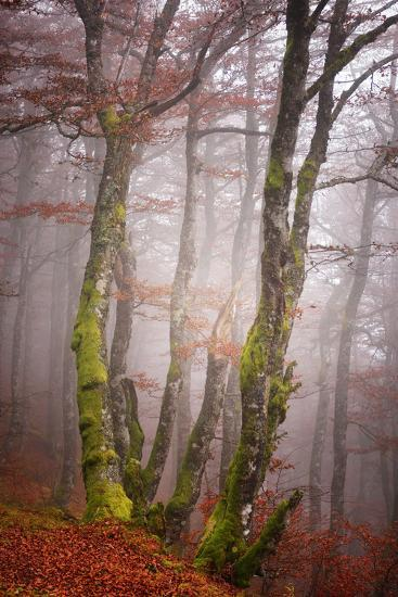 Forest Fog-Philippe Sainte-Laudy-Photographic Print