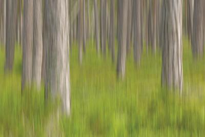 Forest Fresh-Staffan Widstrand-Giclee Print