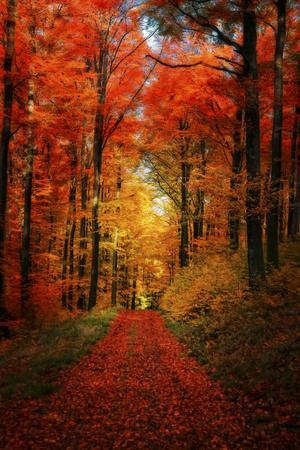 https://imgc.artprintimages.com/img/print/forest-garden_u-l-q1aih5t0.jpg?p=0