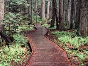 Forest, Glacier National Park, Montana