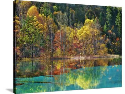Forest in autumn colours, Sichuan, China-Frank Krahmer-Stretched Canvas Print