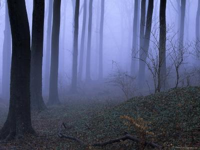 Forest in the Fog, Bielefeld, Germany-Thorsten Milse-Photographic Print