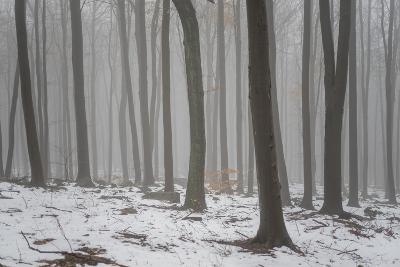 Forest in the Mist at Thaw Sleza Mount Landscaped Park- Shapencolour-Photographic Print