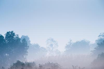 Forest in the Morning Mist-Pongphan Ruengchai-Photographic Print