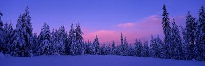 Forest in Winter, Dalarna, Sweden--Photographic Print