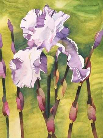 Forest Iris-Mary Russel-Giclee Print