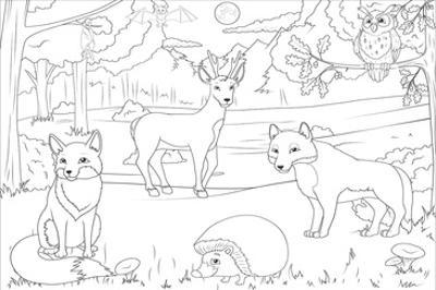 Forest - Kids Design Coloring Art