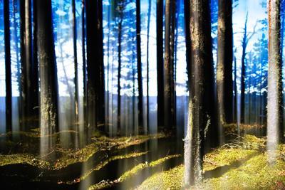 https://imgc.artprintimages.com/img/print/forest-lake-horizon-light-vertical-abstraction_u-l-q130d5c0.jpg?p=0