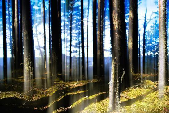 Forest Lake Horizon Light Vertical Abstraction-Nickolay Loginov-Photographic Print