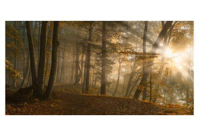Forest Light-Norbert Maier-Art Print
