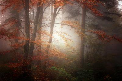 Forest Light-Philippe Sainte-Laudy-Photographic Print