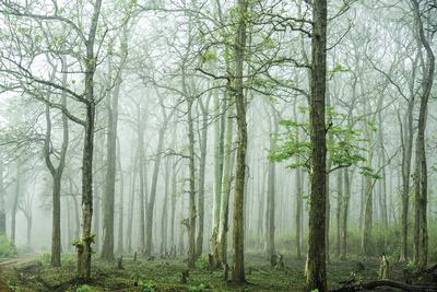 https://imgc.artprintimages.com/img/print/forest-melody_u-l-f93chk0.jpg?p=0