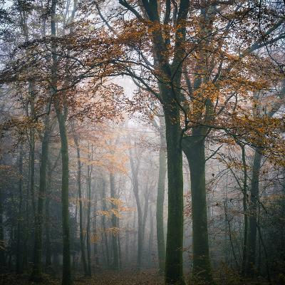 Forest Mood-Philippe Manguin-Photographic Print