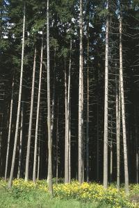 Forest, Moravia, Czech Republic