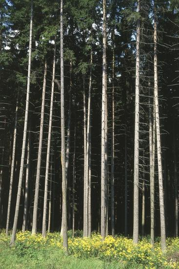 Forest, Moravia, Czech Republic--Photographic Print