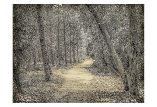 Forest of Dreams-Kimberly Allen-Art Print