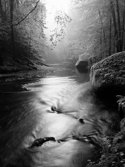 Forest on Bank of Autumn Mountain River Covered by Beech Leaves. Bended Branches above Water. Black-rdonar-Photographic Print