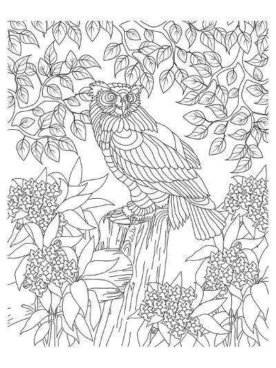 Forest Owl Coloring Art--Coloring Poster
