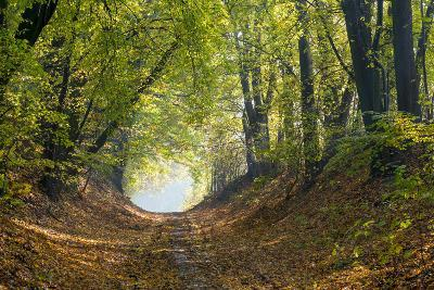 Forest Path in Autumn-Piotr Pawinski-Photographic Print