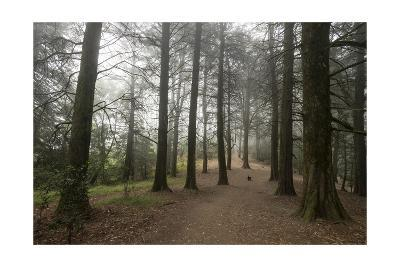 Forest Path Trees Dog-Henri Silberman-Photographic Print