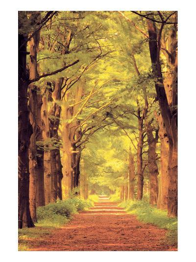 Forest Path--Art Print