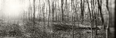 Forest, Pocono Mountains, Pennsylvania, USA--Photographic Print