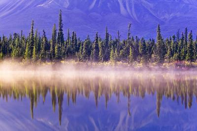 Forest Reflects-Design Pics Inc-Photographic Print