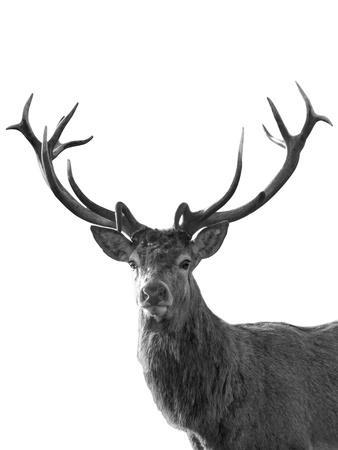 https://imgc.artprintimages.com/img/print/forest-royal-grand_u-l-f9i1ji0.jpg?p=0