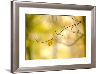 Forest Run I-James McLoughlin-Framed Photographic Print