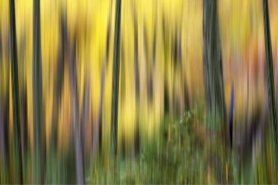 Forest Run II-James McLoughlin-Photographic Print