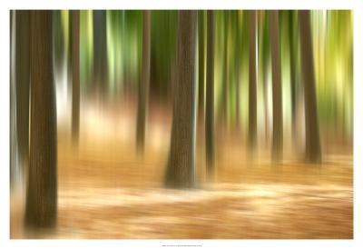 Forest Run III-James McLoughlin-Art Print