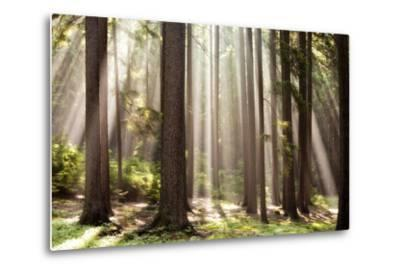 Forest Scene with Sun Rays Shining Through Branches